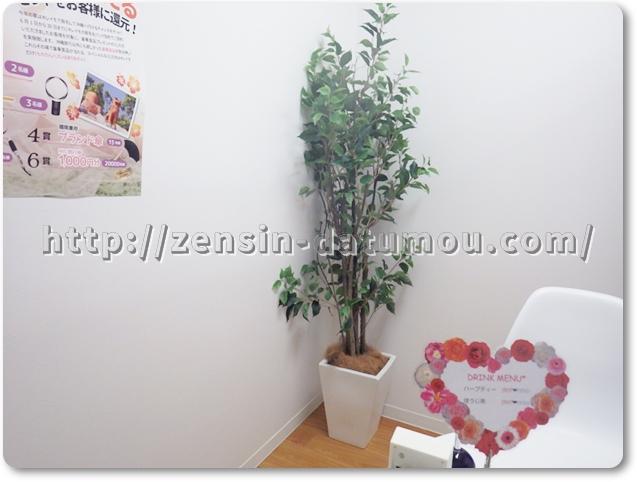 キレイモカウンセリングルーム観葉植物